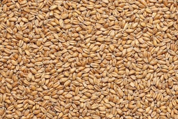 Блюда из пророщенной пшеницы   | материнство - беременность, роды, питание, воспитание