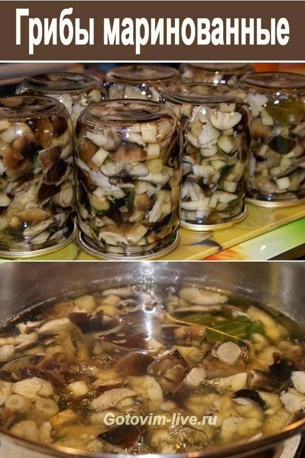 Рецепты маринованных шампиньонов — готовим в домашних условиях