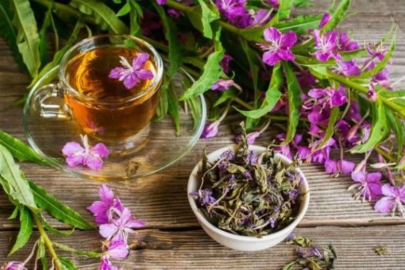 Как ферментировать иван-чай правильно