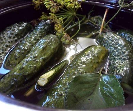 Как приготовить маринованные огурцы быстрого приготовления