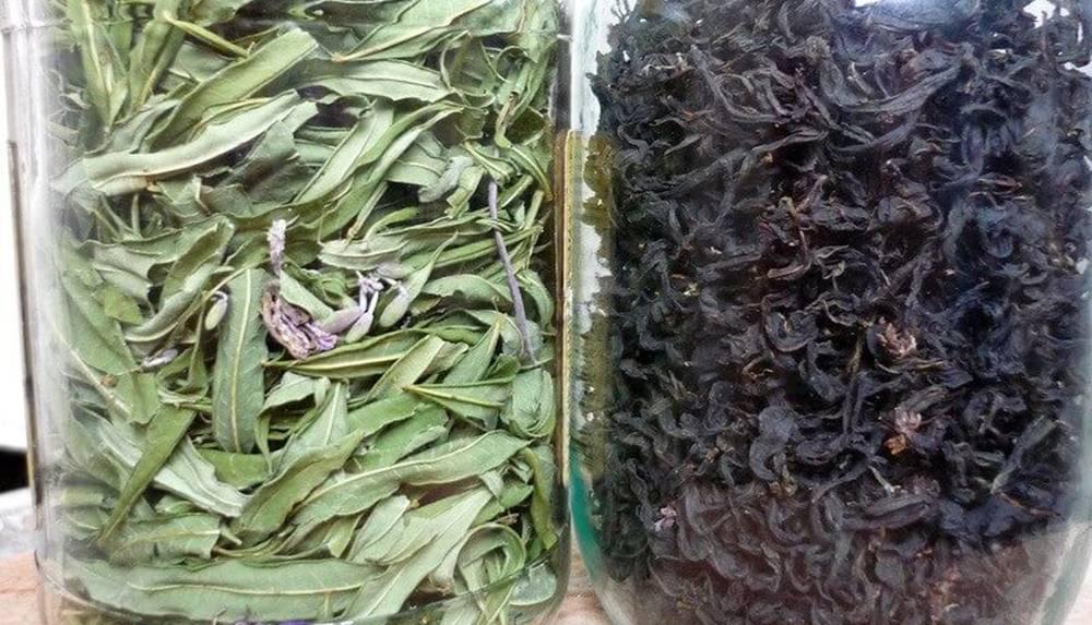 Ферментация кипрея и других трав