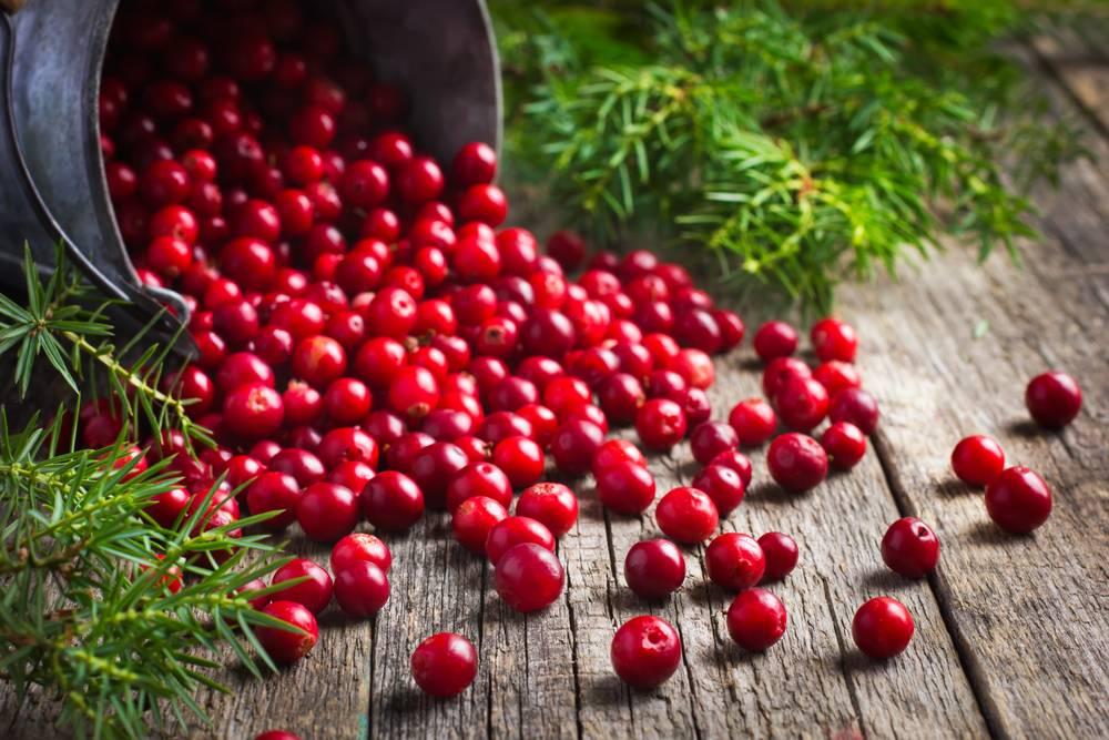 Как сохранить ягоды клюквы