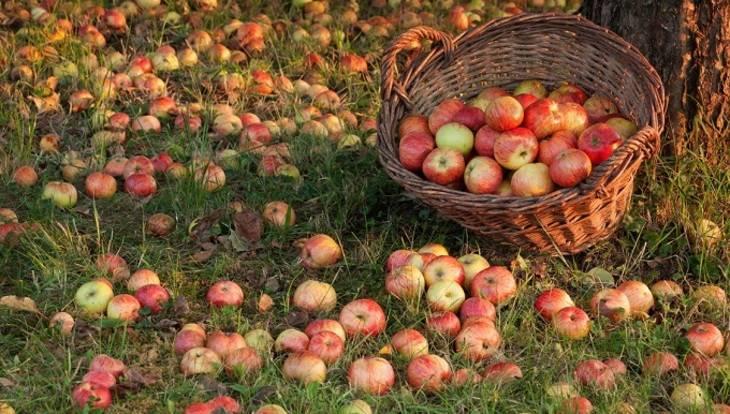 Сонник кусать червивые яблоко. к чему снится кусать червивые яблоко видеть во сне - сонник дома солнца