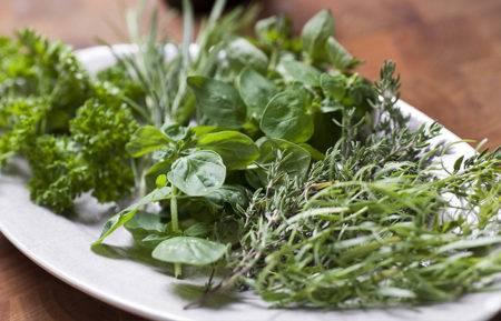 Итальянские травы – описание с фото, калорийность; состав, что входит в продукт; польза и вред; как приготовить дома; применение в кулинарии