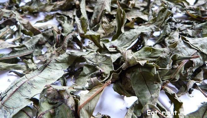 Как быстро и просто ферментировать иван-чай