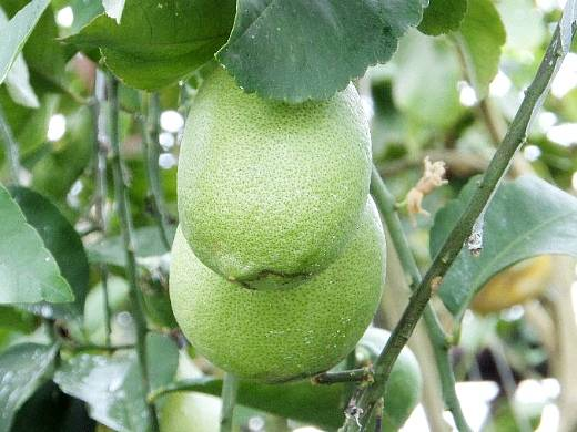 Лимон с сахаром в банке на зиму: 5 лучших пошаговых рецептов приготовления