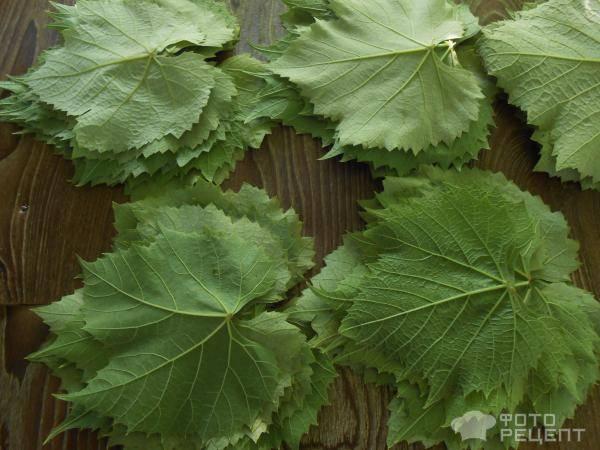 Виноградные листья для долмы на зиму