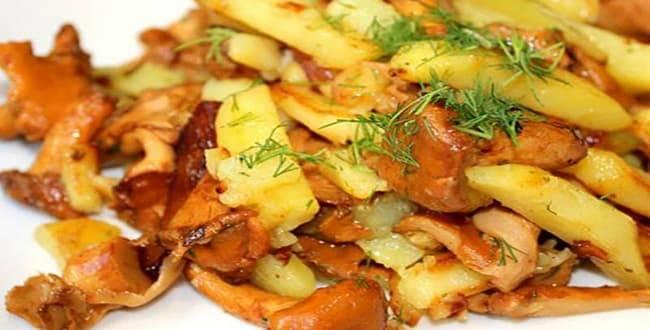 Как пожарить картошку с лисичками: рецепт со сметаной. лисички жареные в сметане с картошкой.