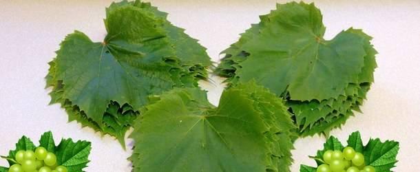 Как сделать заготовку виноградных листьев на зиму для долмы по пошаговому рецепту с фото