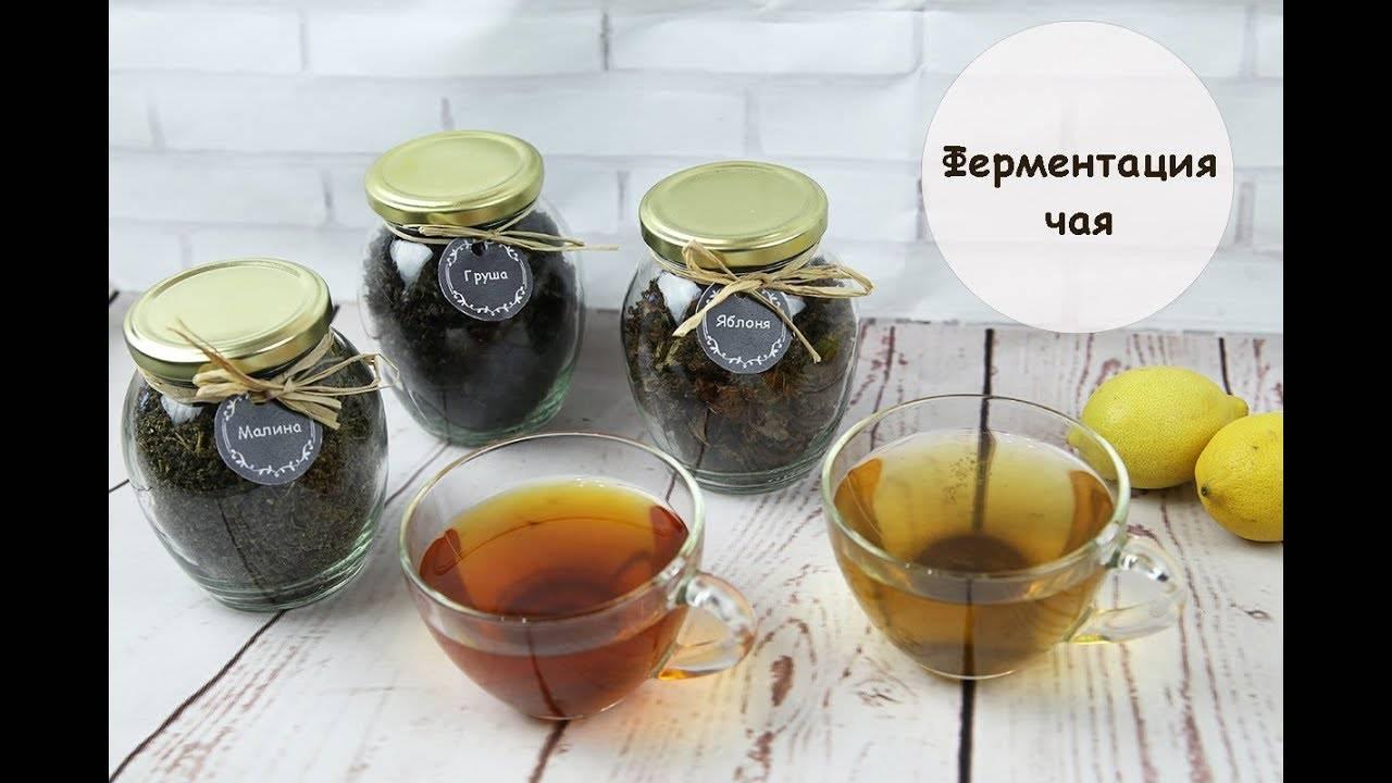 Заготовка листьев и трав для чая в домашних условиях