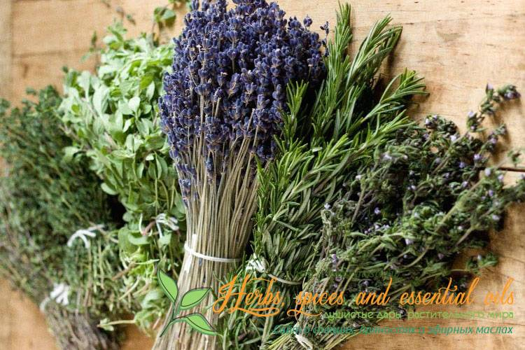 Итальянские травы — состав уникальной пряной приправы