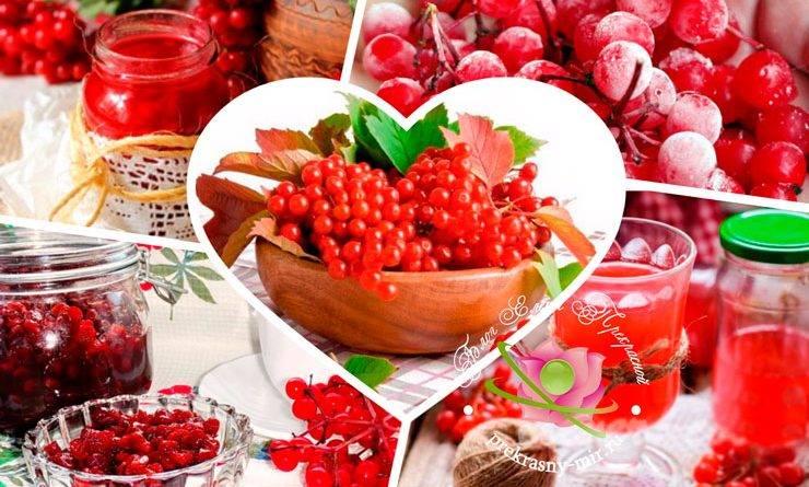 Калина с медом: рецепт, от чего помогает, польза и вред