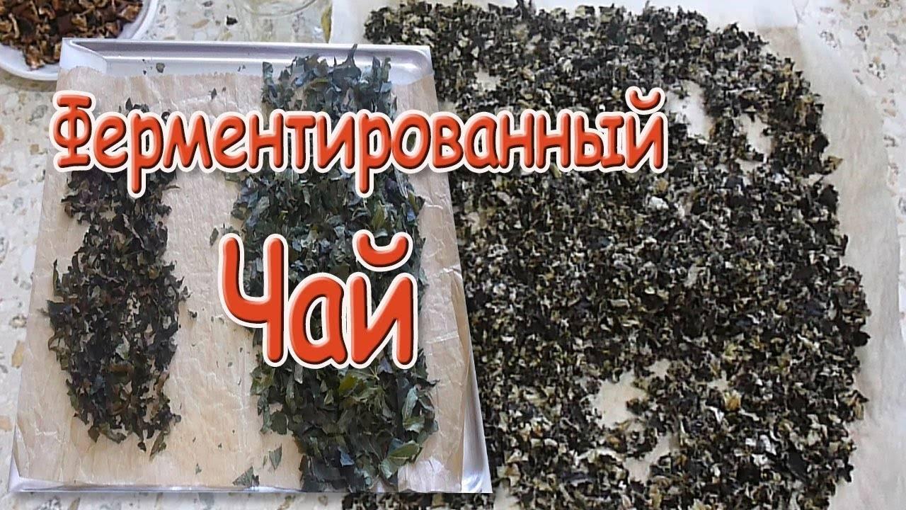 Домашняя ферментация листьев вишни для полезного чая