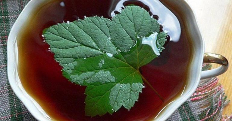 Чай из земляники (земляничный чай)