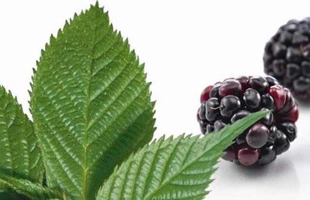 Облепиховый чай - рецепты, польза и вред, сушка листьев и заморозка ягод для чая