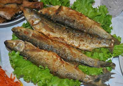 Польза рыбы кефаль, как выбрать и приготовить, где водится