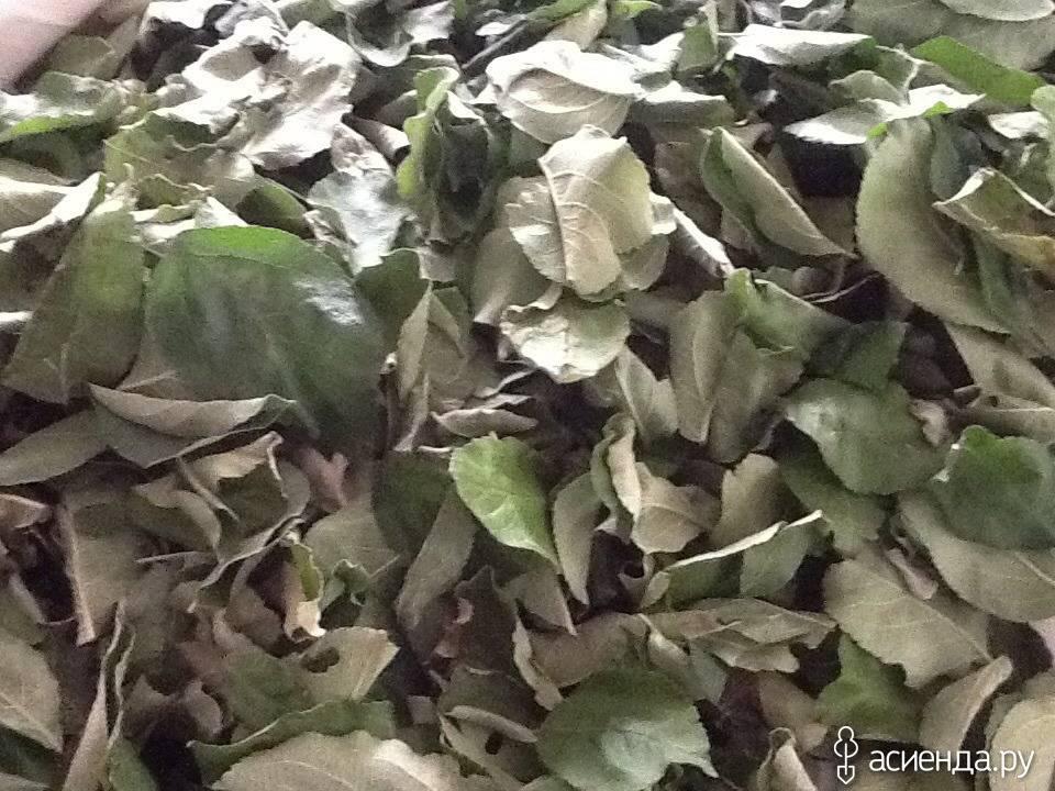 Яблочный чай домашней ферментации: рецепт с фото