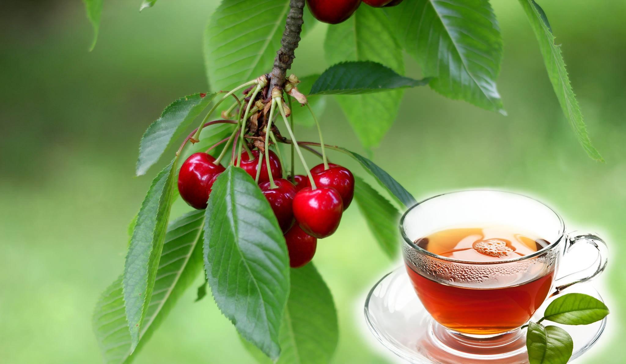 Листья земляники лесной – лечебные свойства и противопоказания, чай из листьев земляники