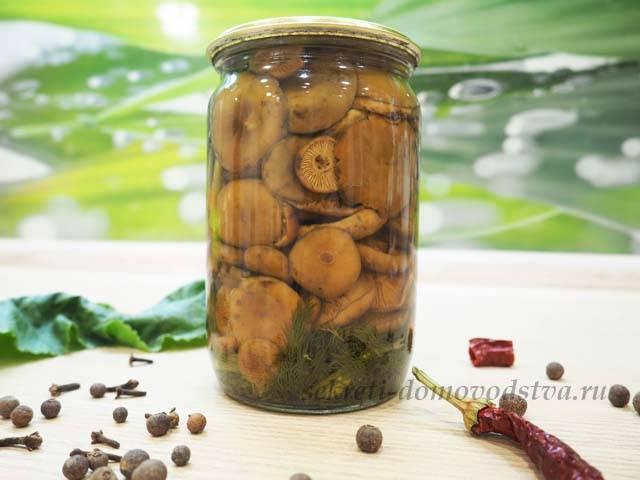 Грибы на зиму в банках. простые и вкусные рецепты маринованных грибов