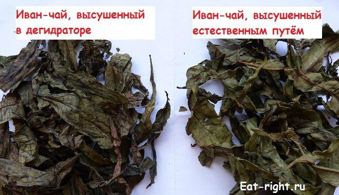 Самые лучшие способы ферментации иван-чая