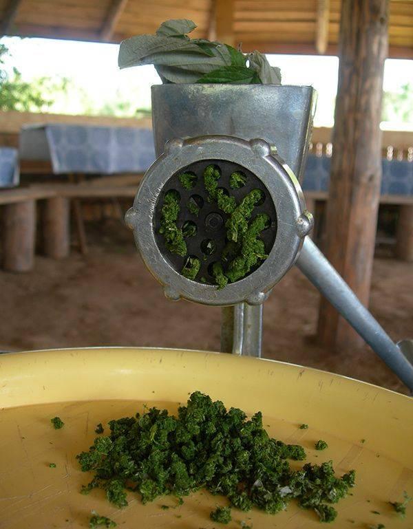 Ферментация листьев груши в домашних условиях