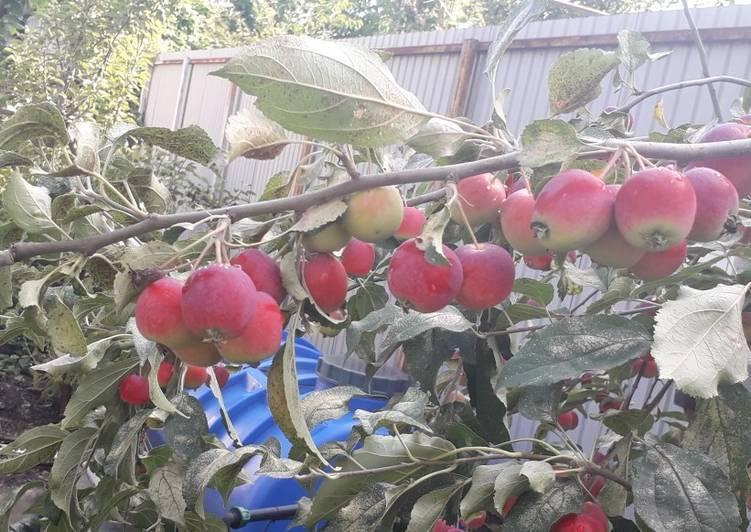 Черви в яблоках — как избавиться от вредителя?