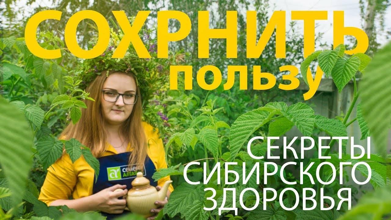 Ферментирование листьев и трав в домашних условиях