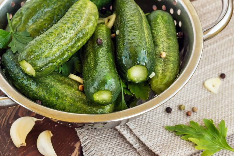 Малосольные огурцы: классический рецепт засолки в домашних условиях