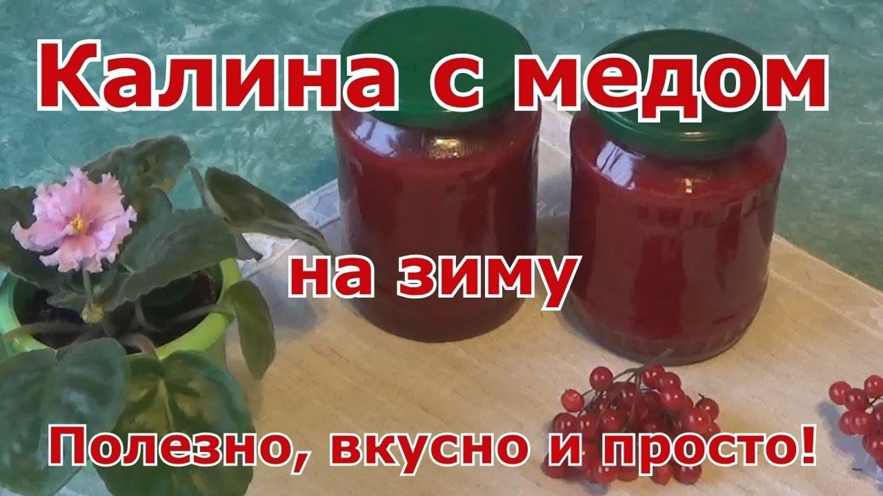 Как приготовить калину с медом: рецепты