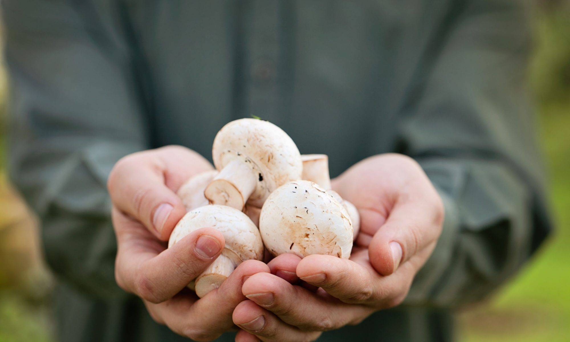 Фарш с грибами