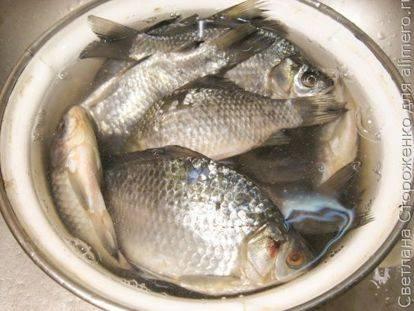 Жареный, вяленый, сушеный, вкусный в любом виде — карась: какова ценность речной рыбки, ее вкусовые качества и калорийность